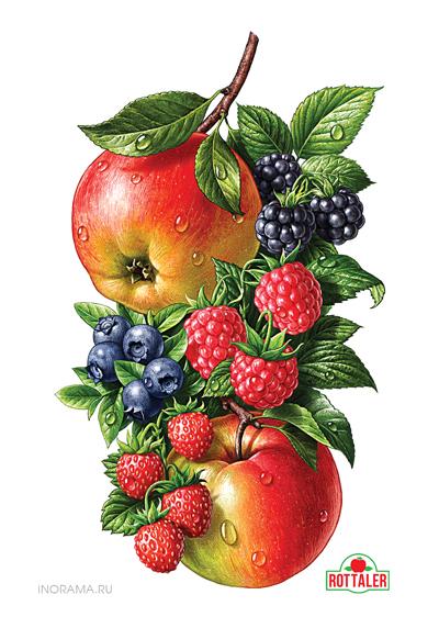 Beautiful fruit illustrations AterietAteriet Food Culture