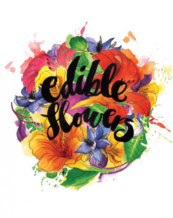 Edible flowers illustration, Watercolor food illustrations