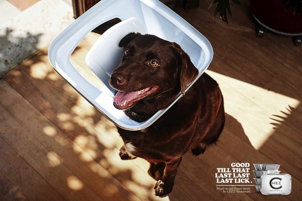 Dogs Stuck in Waste Baskets for the fun Chez Restaurant Ads