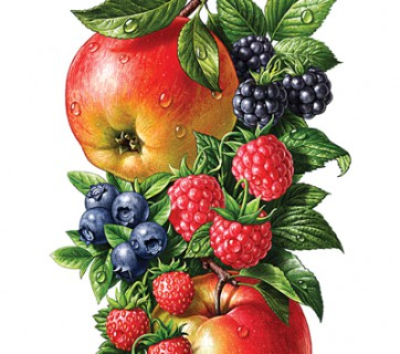 fruit illustration apples blueberries