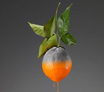 Fruit Photographs by Giorgio Cravero