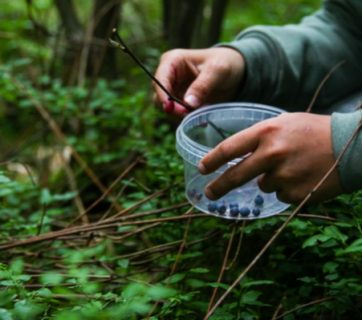Everything You Need To Know To Forage In Sweden